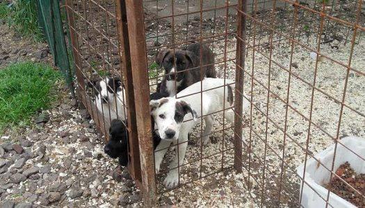 Százhúsz kutyus vár gazdára Gyöngyösön
