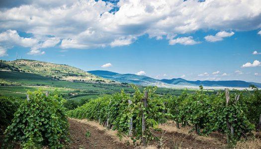 Dunai Bernadett: Fontos, hogy összefogjanak a mátrai borászok