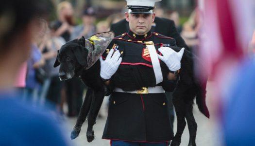 Százak búcsúztatták az elaltatott bombakereső kutyát