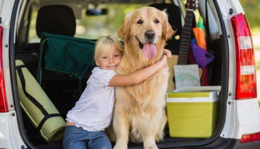 Kutyával indulsz nyaralni?