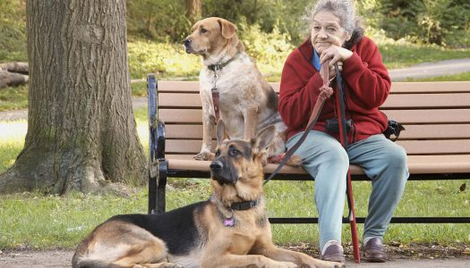 Az idősebb embereknek receptre kellene kutyát felírni