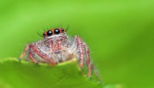 Közel 800 pókfaj él hazánkban