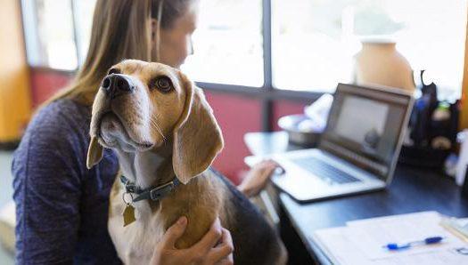 Indul a kutyabarát cégek versenye