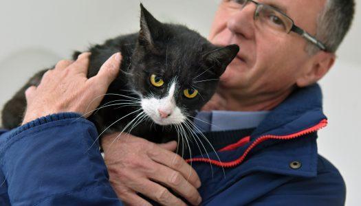 Beteg, sérült és elhagyott macskák lelnek otthonra Kápolnán