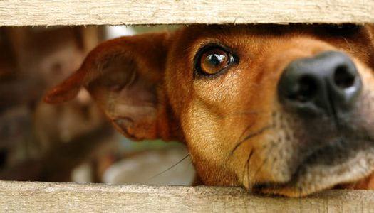 A kóbor kutyusok utolsó reménye a gyöngyösi menhely
