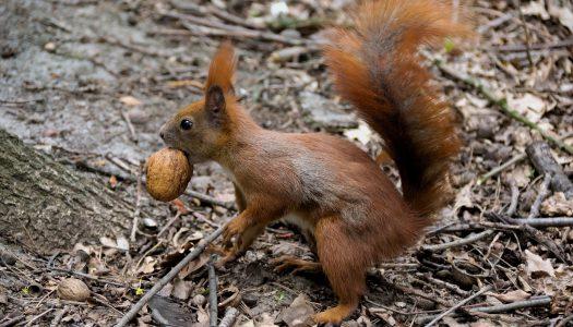 Őszi cukiság: mókusokkal a mátrai gyógyintézetek parkjában