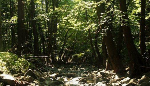Tudja-e, hogy hol található Magyarország egyetlen valódi őserdeje?