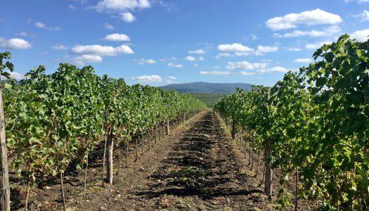 Mátrai borok mutatkoznak be Budapesten