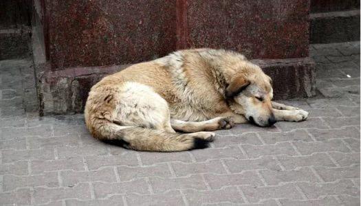 Sok kutya szökött el szilveszterkor