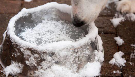 A kutyákra leselkedő téli veszélyek