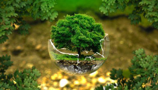 Környezetvédelmi célú kutatást indított a Biocentrum Kft.